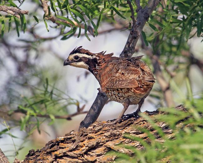 Senator Portman Supports Bipartisan Bill To Galvanize Wildlife Conservation, Help Prevent Extinctions Nationwide